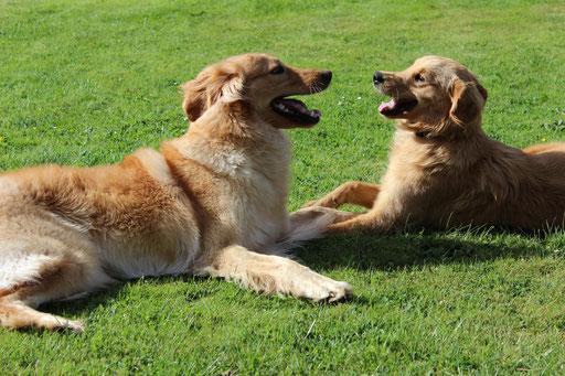 Bellis (links) und Tilda (rechts)