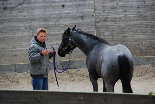 Colt start by Björn Binek, April 2014