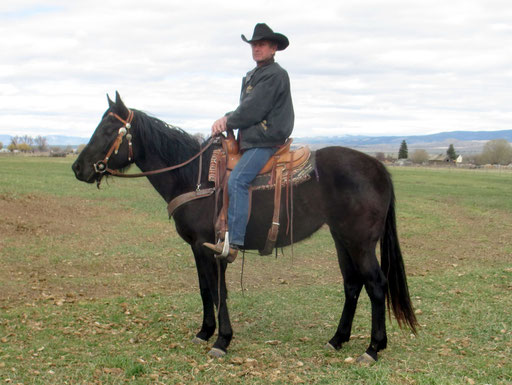 Am Tag, als Ty von Montana nach Texas gebracht wird: Rockey reitet sie von der Herde weg....