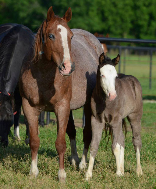 Forsty mit 2014 colt, Guns And Whiskey (by No Guns Please). Picture by Ashlyn Williams