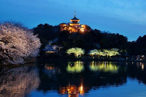 空は青く、桜は黄色みを帯び 幻想的です(午後6時22分)