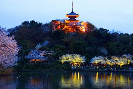 三重塔が池に映り込み 夕景の雰囲気(午後6時9分)
