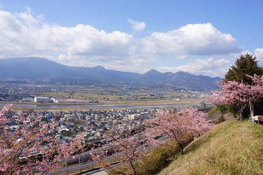 松田山桜まつり