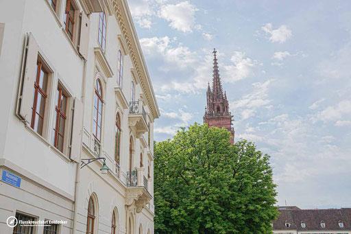 Das Baseler Münster versteckt sich noch hinterm Baum