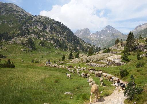 Marcadau - Vallée de Cauterets