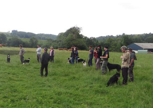 Formation dressage de chiens pour les bergers et vachers en estive