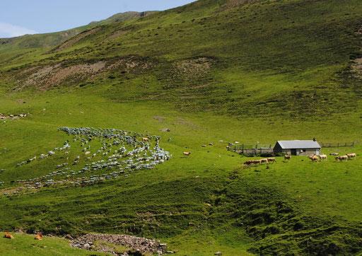 Arizes - Haute Vallée de l'Adour