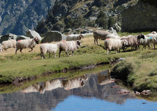 Larribet - Val d'Azun