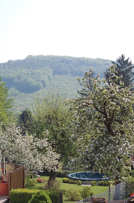 Baugrund Buchelbach 900m2, gute Lage Verkauft innerhalb von 6 Monaten. KP: 150.000.-