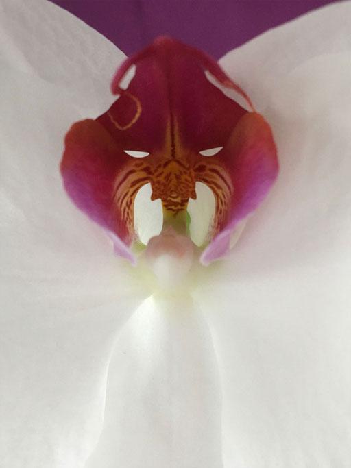 Orchideengeist III