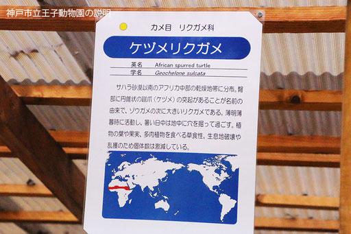 インドホシガメの説明(神戸市立王子動物園)