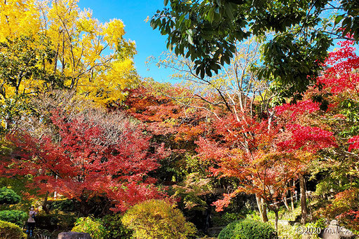 赤に黄色に美しい庭園(アサヒビール大山崎山荘美術館)