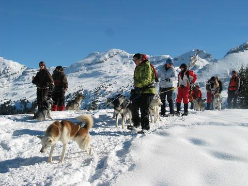 Auf einer Schneeschuhtour, Chenook zeigt allen, was es heisst, einen Husky am Bauchgurt zu haben