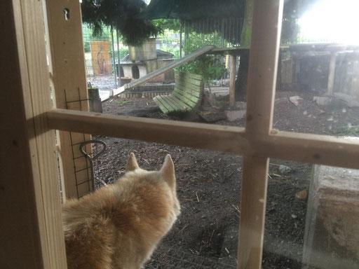 Unser Oldie schaut von seinem sicheren Häuschen aus in einen trüben Regentag