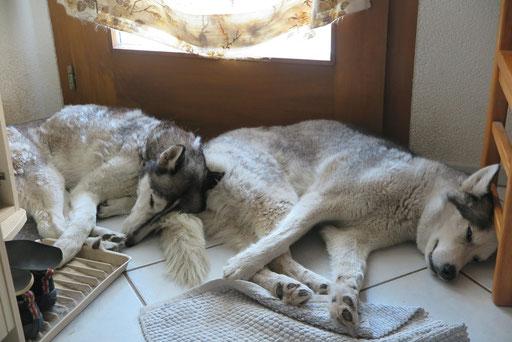 Eagle lehnt sich an Yukon.