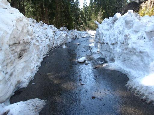 4月中旬、ようやく林道の除雪が進みます。