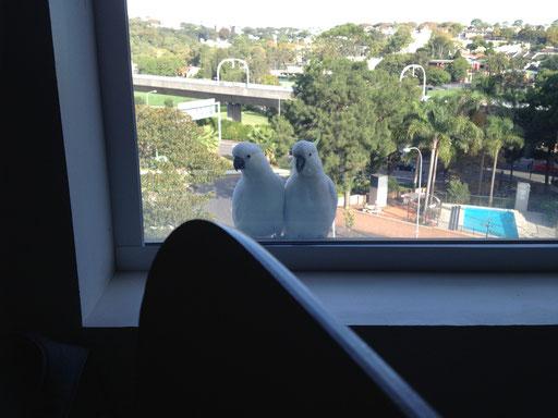 Willkommen in Sydney!