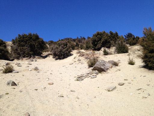 downhill tracks