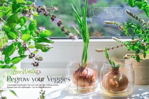 My GREEN Home, regrow Gemüse, Resteverwertung, Küche, Zero Waste, Müllvermeidung