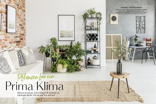 My GREEN Home, Prima Klima, Zimmerpflanzen, Raumklima