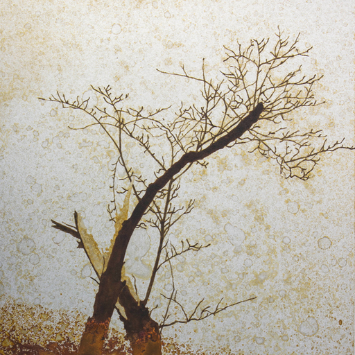 折れた木 Broken tree