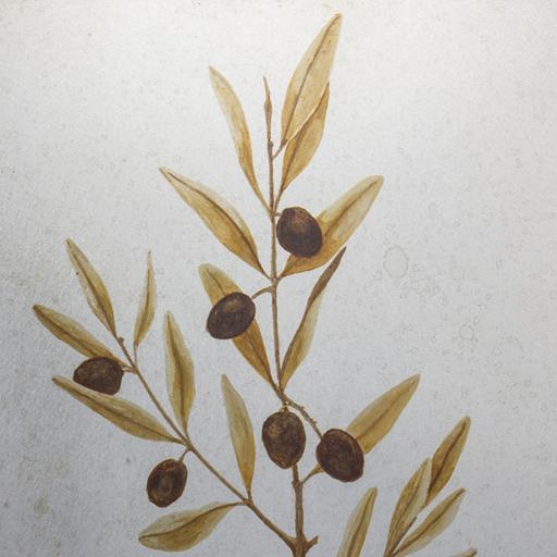 橄欖 Olive