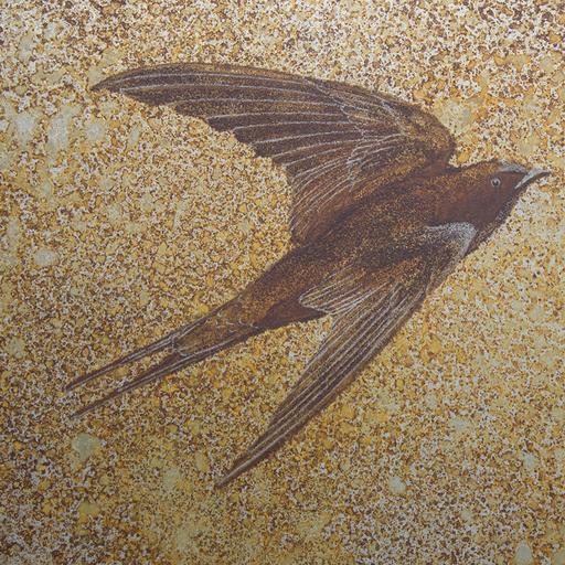 ツバメ Barnswallow