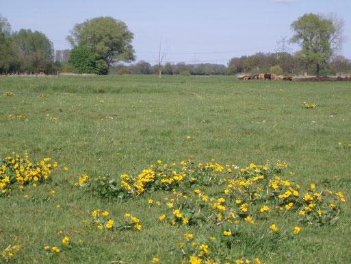 Wir erwerben Flächen und entwickeln sie zu ökologisch wertvollem Grünland