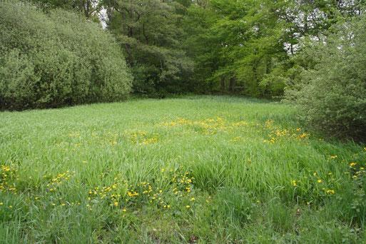 Die orchideenreiche Feuchtwiese bei Havixbeck wird seit 15 Jahren von der AG Botanik betreut Bild: Joachim Eberhardt