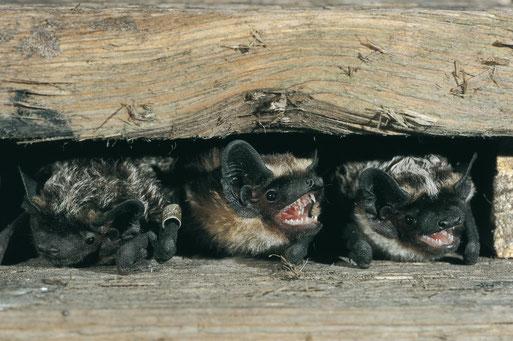 Mitmachen Beim Naturschutz Am Haus Nabu Ganderkesees Webseite
