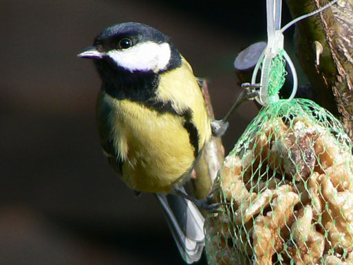 Vogelfütterung - Foto: Rolf Juergens