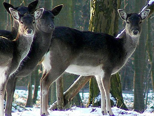 Wild - Foto: Rolf Juergend