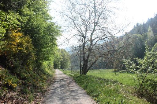 Wir wandern bergab ins malerische Igelbachtal und durch dieses zurück nach Loffenau - Ansicht im Igelbachtal. Für die Wanderung benötigen wir im gemächlichen Tempo ca. 2,5 Stunden (G. Franke, 19.04.2020)
