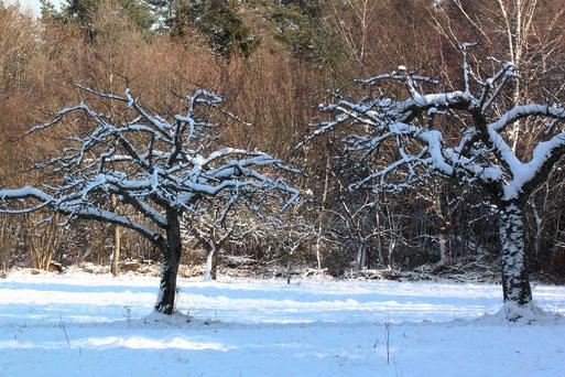 Streuobstwiese im Winter - Nähe Schäferei, Spielberg (G. Franke, 10.01.2021)