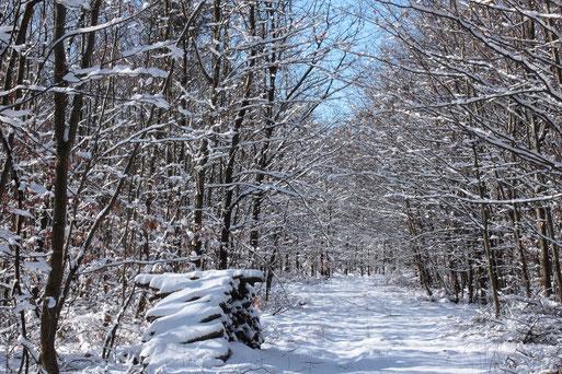 Winterwald bei Karlsbad-Spielberg (G. Franke, 11.02.2021)