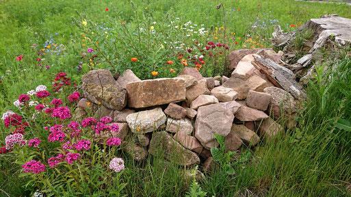 NABU-Blühfläche mit Elementen des naturnahen Gartens in der Pflanzen Oase Jansen, 76307 Karlsbad, ein Jahr nach der Anlage sich selbst überlassen bis auf eine Nachsaat auf einem kleinen Stück (G. Franke, 19.06.2020)