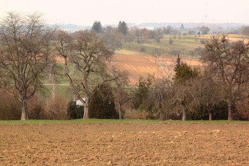 Ackerflächen zwischen Langensteinbach und Auerbach (G. Franke, 09.03.2021)