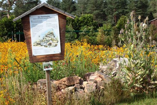 unsere NABU-Blühfläche im Gartenzentrum Jansen - Jahreszeiten und Wachstumsbedingungen prägen das sich ständig wandelnde Bild der Fläche (G. Franke, 20.07.2020)
