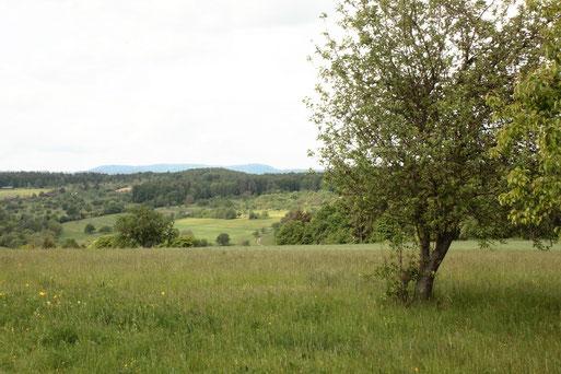 Aussicht oberhalb von Obernhausen (Birkenfeld) in Richtung Nordschwarzwald - gute Wandermöglichkeiten (G. Franke, 03.05.2020)