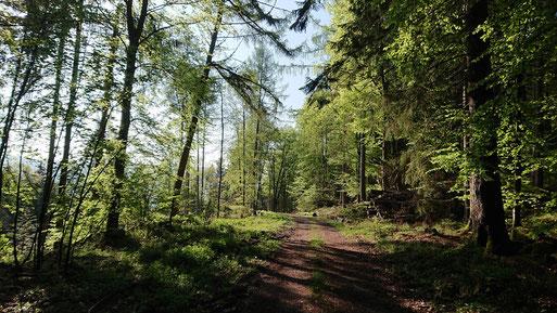 Maigrün - Waldweg bei Dennach (G. Franke, 01.05.2019)