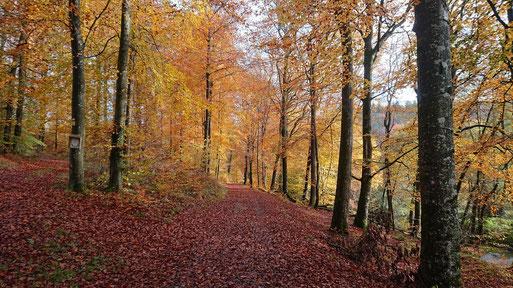 Herbststimmung im Moosalbtal bei Fischweier - kurz vor der Einmündung ins Albtal (G. Franke, 09.11.2019)