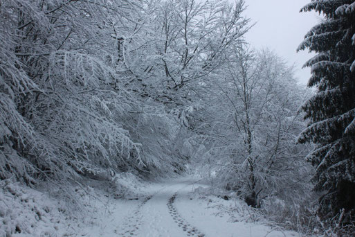 G. Franke: weiter auf dem Maienbergkopfweg