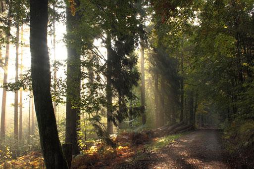 morgendlicher Herbstwald; die Sonne hat den Nebel vertrieben - oberhalb der Diebswiesen zwischen Karlsbad-Spielberg und Ittersbach (G. Franke, 18.10.2020)