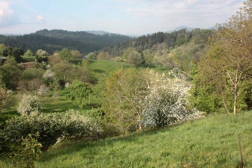 Sehr zu empfehlen ist im Frühling eine Wanderung von Loffenau in Richtung Lautenbach und zurück über das Igelbachtal - Ansicht bei Loffenau (G. Franke, 19.04.2020)