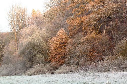 Morgensonne und Rauhreif am Rande des Kurparkes in Waldbronn-Reichenbach (G. Franke, 22.11.2020)