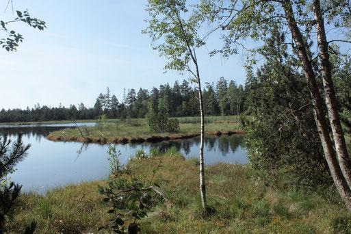 Kaltenbronn - Wildsee