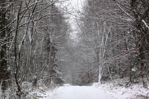 Winterwald - unterwegs zwischen Spielberg und Ittersbach (G. Franke, 17.01.2021)