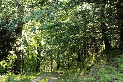 am Wurstbergkopf bei Bad Herrenalb (G. Franke, 12.07.2020)