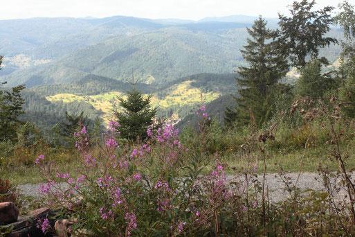 Blick von unterhalb der Langmartskopfhütte im Nordschwarzwald in die Gegend um Reichental (G. Franke, 16.08.2019)