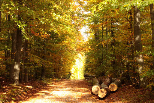 Waldweg zwischen Karlsbad-Spielberg und Langensteinbach (G. Franke, 25.10.2020)